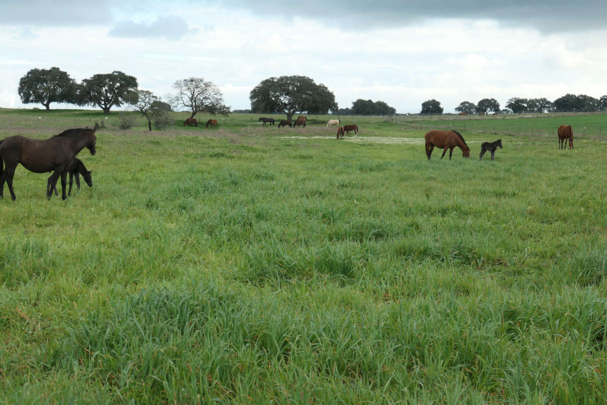 paard verminderde eetlust Centrum Equus