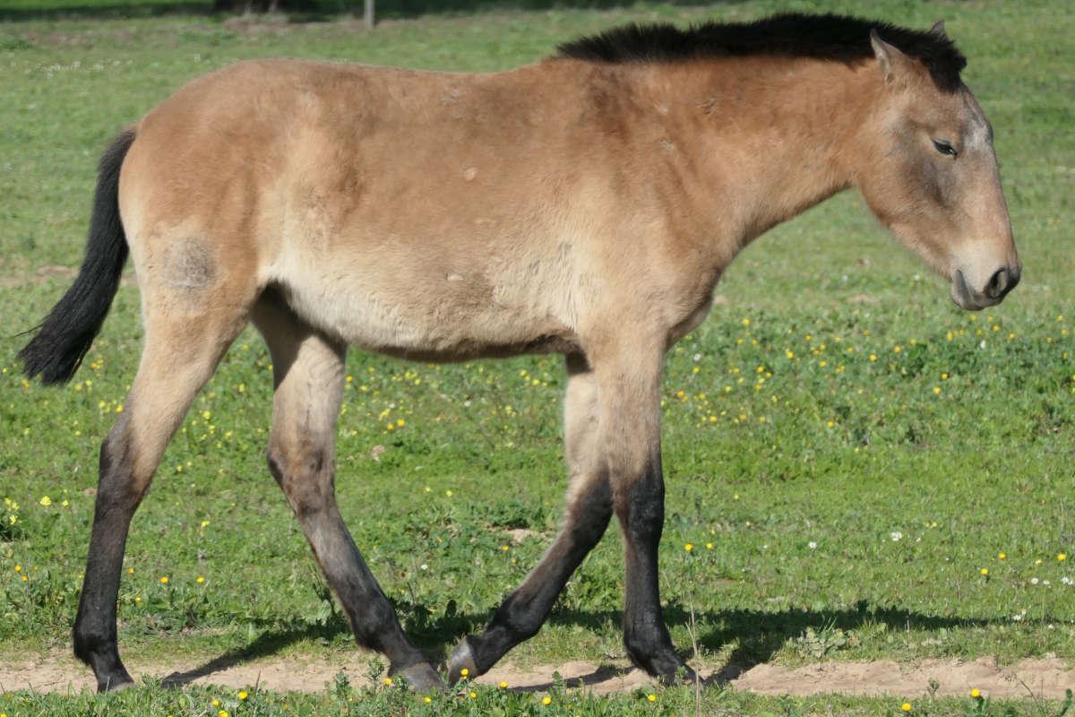 Paarden die bijten Centrum Equus